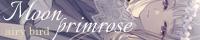 Moon primrose